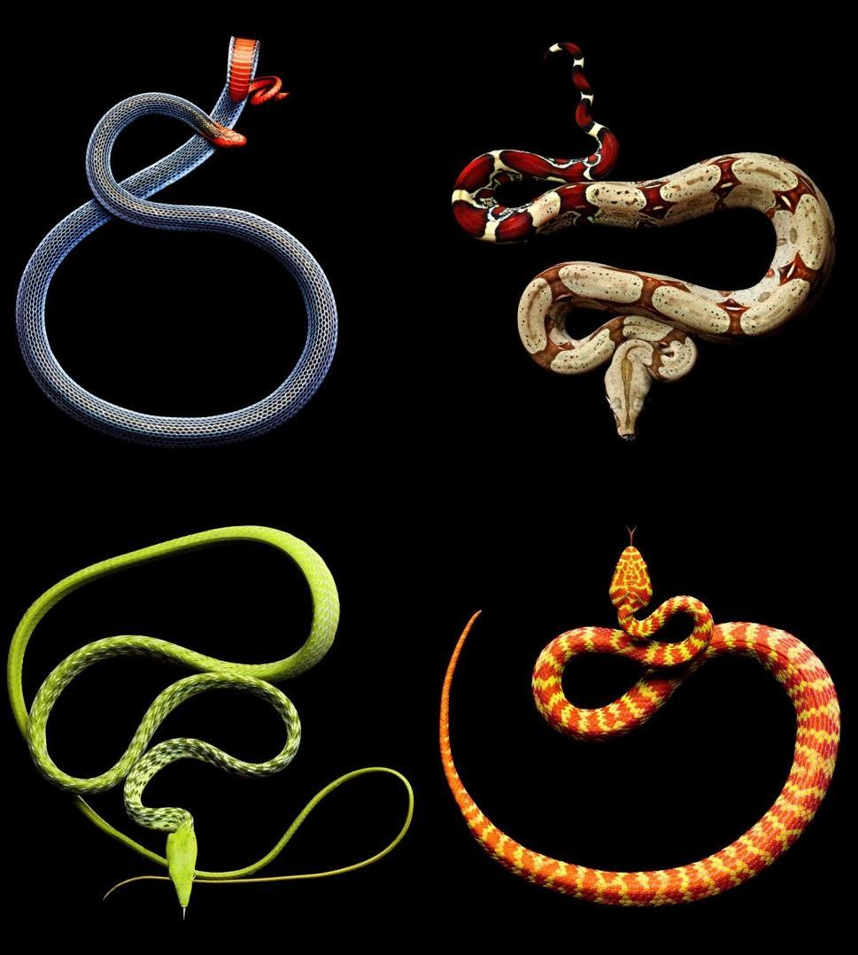 La Seduccion De Las Serpientes