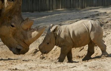 Animales salvajes fieras albherto 39 s blog - Videos animales salvajes apareandose ...