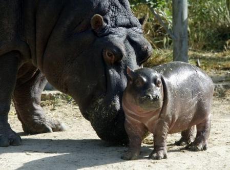 Animales salvajes fieras albherto 39 s blog - Animales salvajes apareandose ...