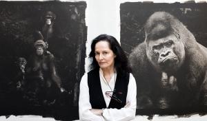 Isabel Muñoz, en su estudio junto a las copias de su último trabajo sobre los primates.CIENCIA. NO UTILIZAR SIN CONSULTAR CON FOTOGRAFÍA