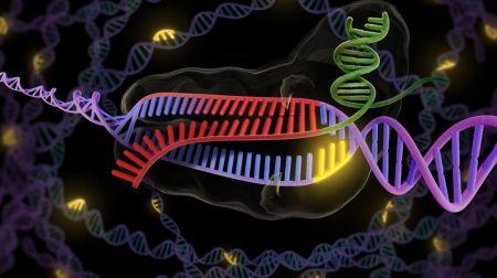 la-enzima-crispr-en-verde-y-rojo-se-une-a-una-hebra-doble-de-adn-en-purpura-y-rojo-para-asi-cortar-la-parte-deseada